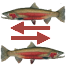 In-season Steelhead Hatchery Returns Summary Icon