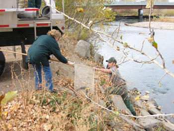 Stocking Steelhead in the Boise River
